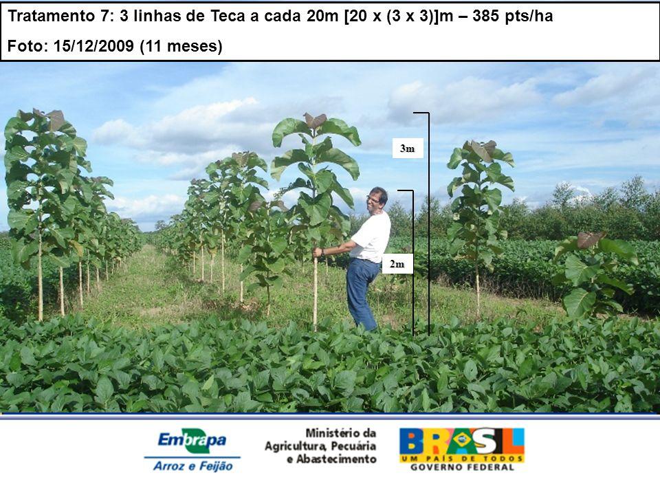 Tratamento 7: 3 linhas de Teca a cada 20m [20 x (3 x 3)]m – 385 pts/ha